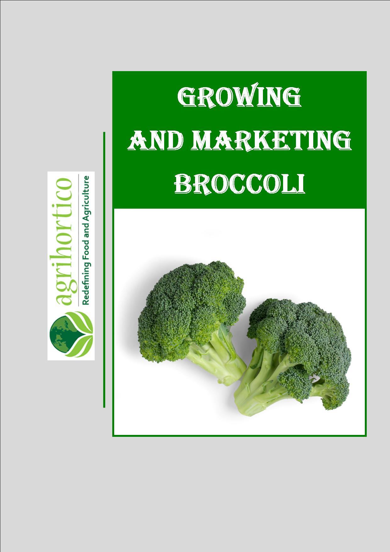 growing-broccoli