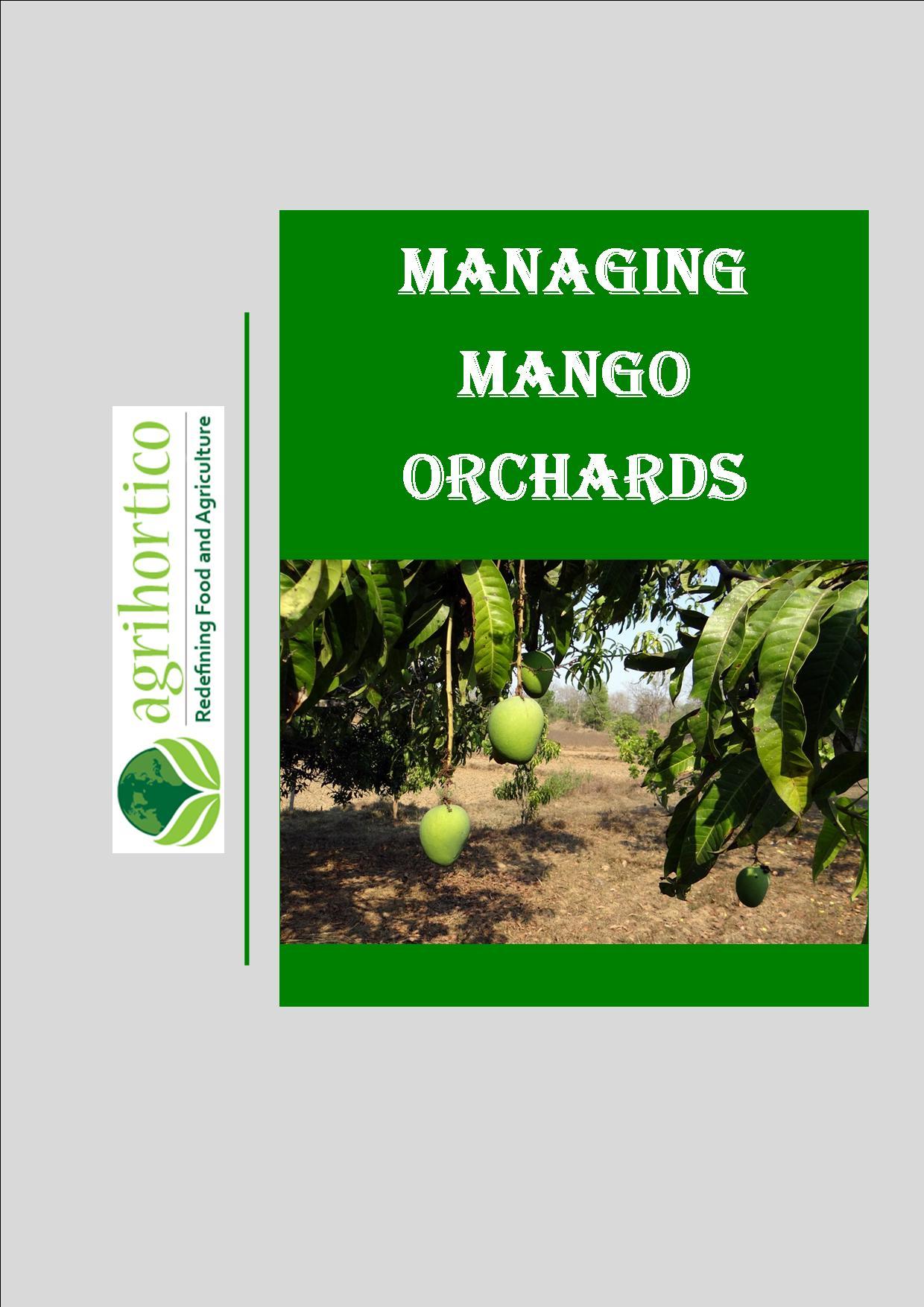 mango-orchards