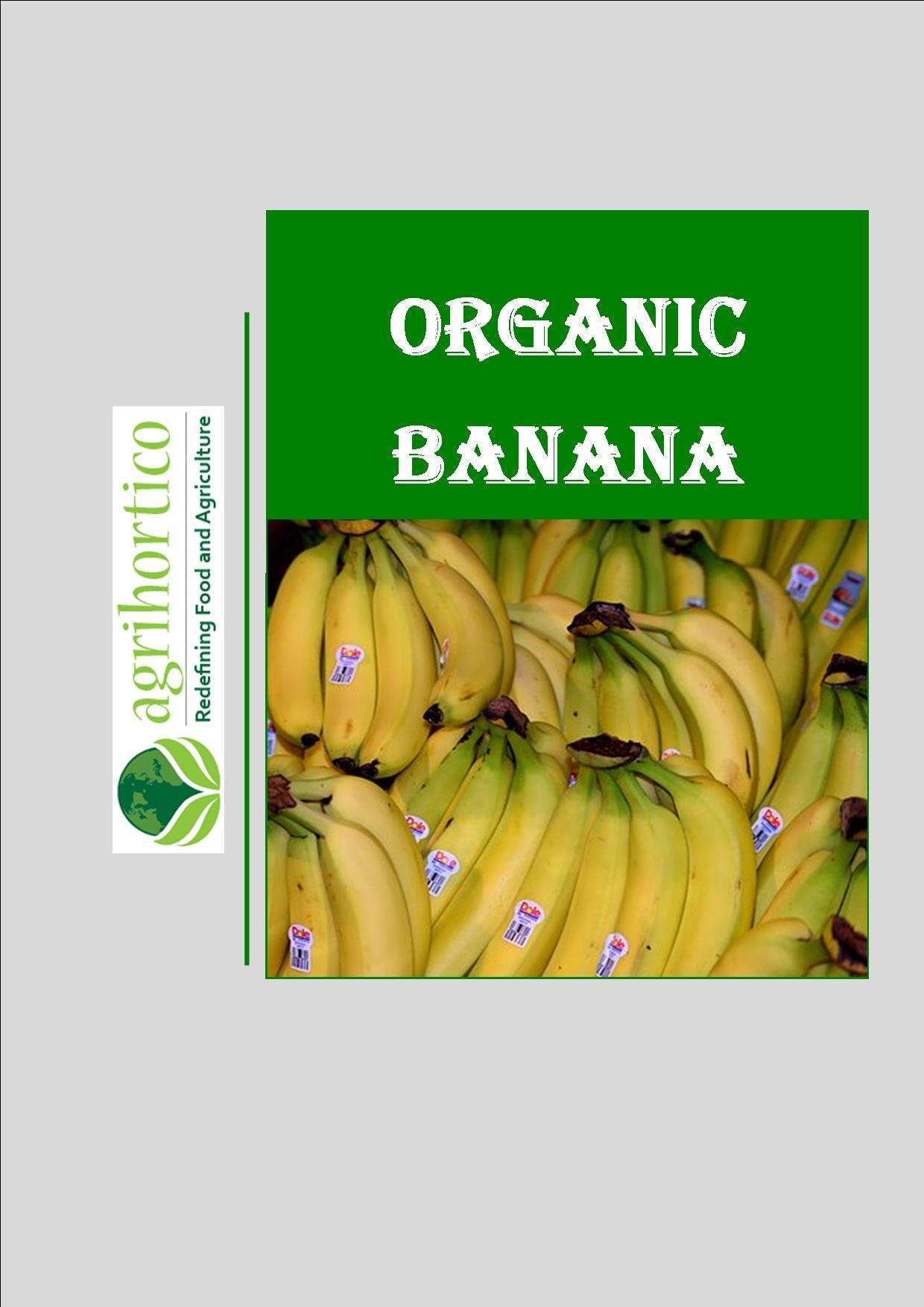 organic-banana