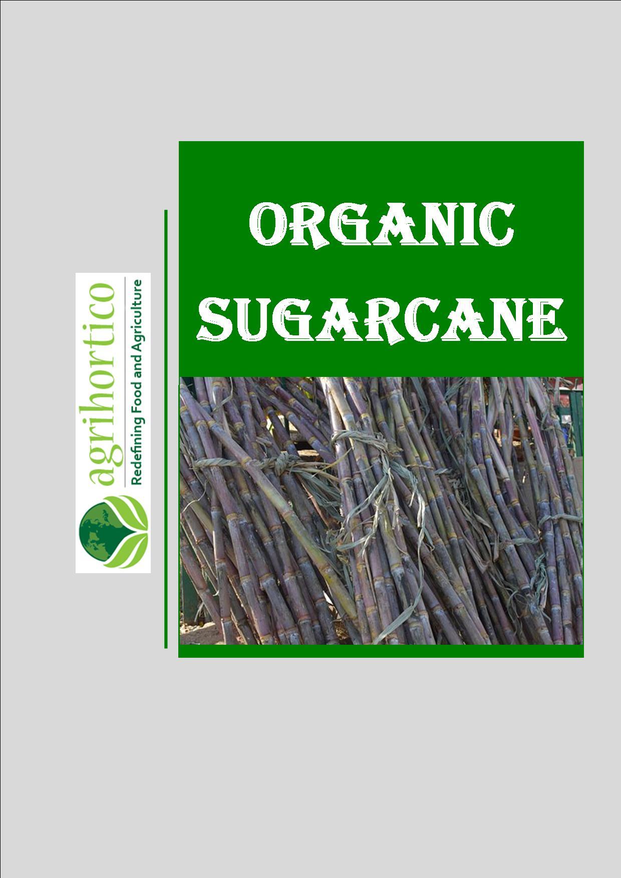 organic-sugarcane