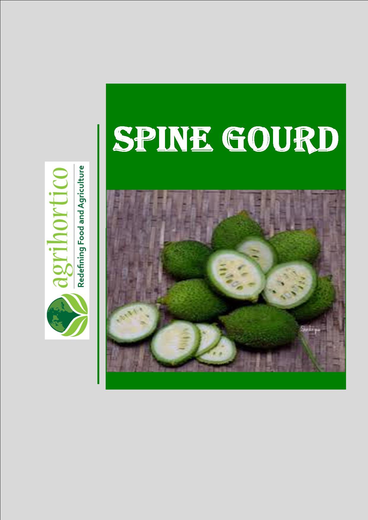 spine-gourd