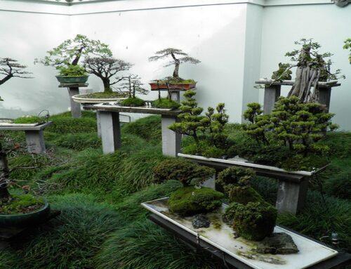 What is a Bonsai Gardening?