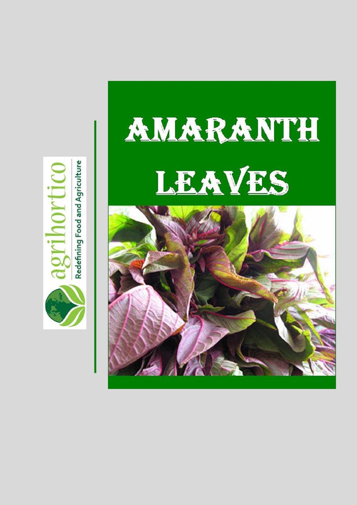 amaranth-leaves